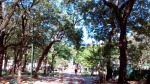 Plaza Uruguay Trees 2